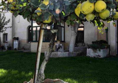 hotel-casa-acacio-san-clemente-cuenca-jardin-39